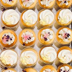Cupcakes - large thumbnail
