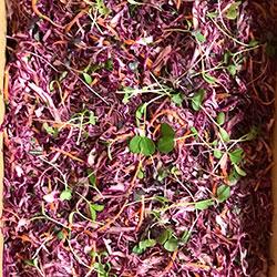 Coleslaw thumbnail