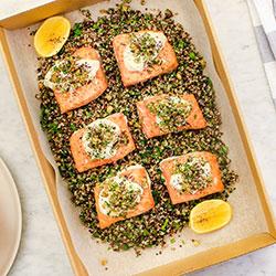 Salmon tarrator thumbnail